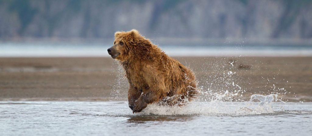 adrenaline-filled-fun-alaska-feel-like-racing-kodiak-bear