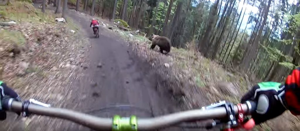 video-feel-like-racing-bear-head-slovakia