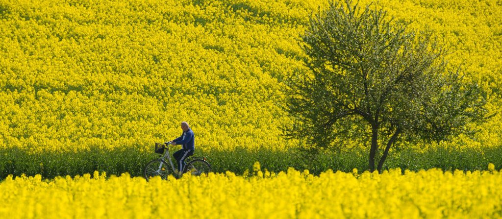 best-spring-cycling-trips-watch-flowers-bloom-saddle