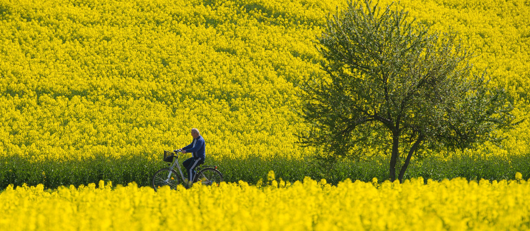 Best Spring Cycling Trips: Watch the Flowers Bloom From ...